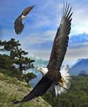 Eagle Sleeves