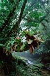 Bocaina National Park