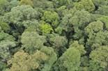 Dipterocarpaceae