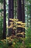 Dense Solitude Wildernesssheltered