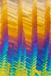 Polarised Light Micrograph
