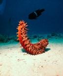 Shoal Coral Underwater Seabed Ocean Floor Red Sea