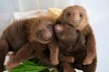 Aviarios Sloth Sanctuary