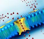 Aquaporin Protein