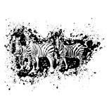 Zebra Lover