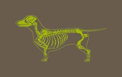 Dachshund X-Ray Decal