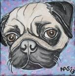 Fawn Pug