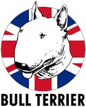 Miniature Bull Terrier Daddy