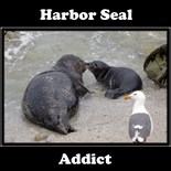 Animals Pets Wildlife Nature