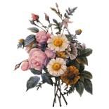 Botanical Lavender Rose Art