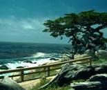 Cypress California