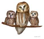 Owl Limb