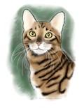 Tiger Cat Breed