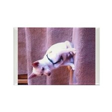 Rat dog Rectangle Magnet