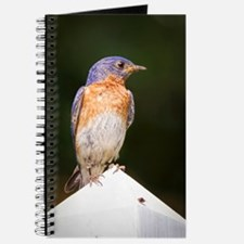 Male Bluebird Journal