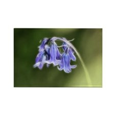 Little Bluebells Rectangle Magnet