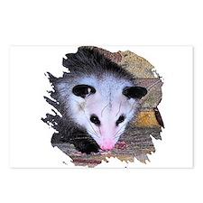 Virginia Opossum Postcards (Package of 8)