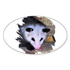 Virginia Opossum Oval Decal