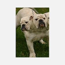 3 headed bulldog Rectangle Magnet