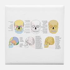 doctor skull Tile Coaster