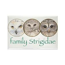 OWLS art, family Strigidae Rectangle Magnet (10 p