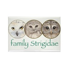 OWLS art, family Strigidae Rectangle Magnet