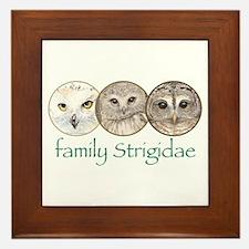 OWLS art, family Strigidae  Framed Tile