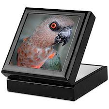 Redbellied Parrot Keepsake Box