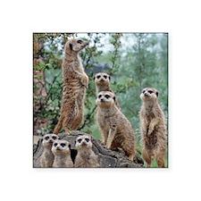 "Meerkat010 Square Sticker 3"" x 3"""