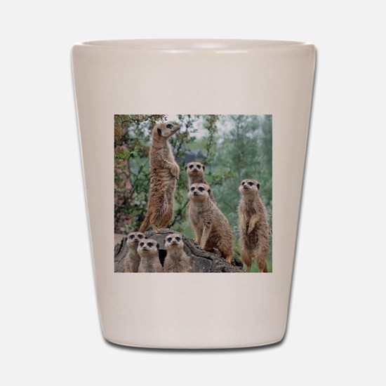 Meerkat010 Shot Glass