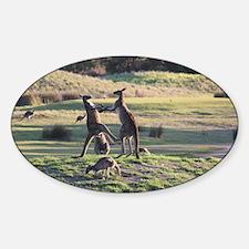 Boxing Kangaroo's Sticker (Oval)