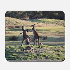 Boxing Kangaroo's Mousepad