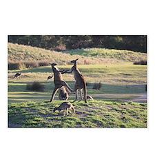 Boxing Kangaroo's Postcards (Package of 8)