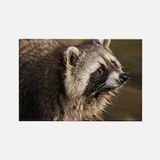 Raccoon Rectangle Magnet