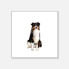 "Aussie Shep (Tri3) Square Sticker 3"" x 3"""