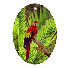Ara Oval Ornament