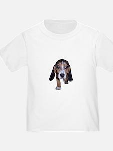 Beagle Puppy Walking T