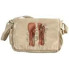 Muscles of the Arm Messenger Bag