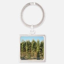 Corn Field Keychains