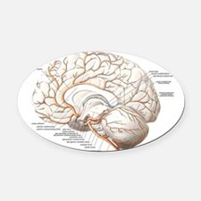 Circulation of the Brain Oval Car Magnet