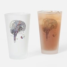 Pathways of the Brain Drinking Glass