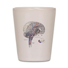 Pathways of the Brain Shot Glass