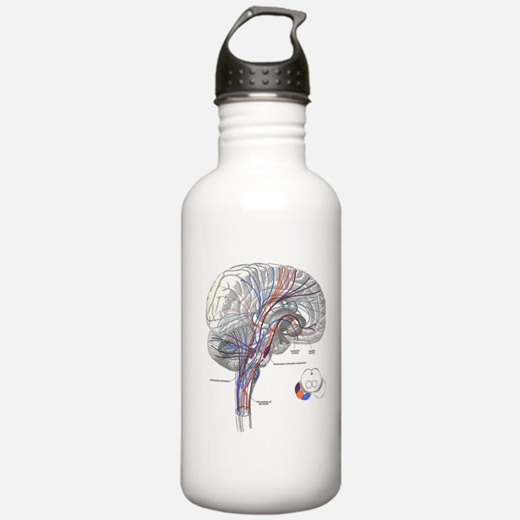 Pathways of the Brain Water Bottle