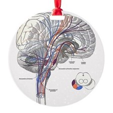 Pathways of the Brain Ornament