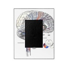 Pathways of the Brain Picture Frame