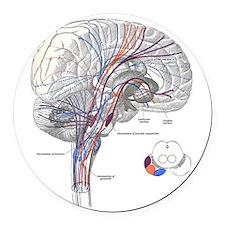 Pathways of the Brain Round Car Magnet