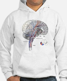 Pathways of the Brain Jumper Hoody