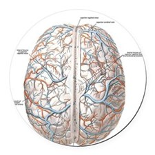 Surface of the Human Brain Round Car Magnet