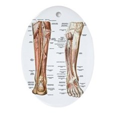Anatomy of the Feet Oval Ornament