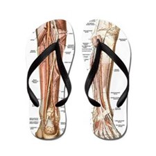 Anatomy of the Feet Flip Flops